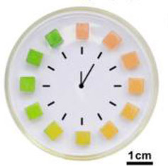 DCN Corp® - The milk monitor changes from red to green over time and changes faster in warmer temperatures.  Credit - © American Chemical Society (ACS)